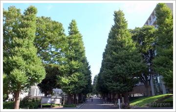 Hiyoshi campus mae