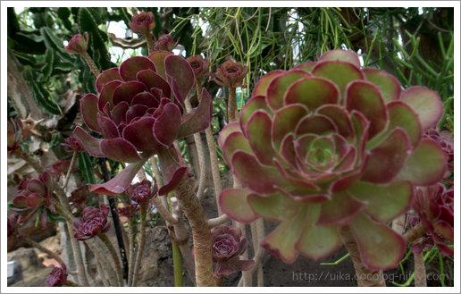 subtropical flora