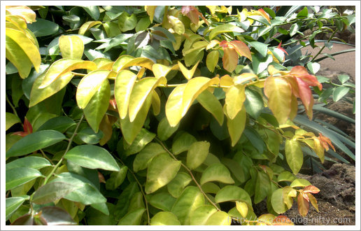 luxuriant foliage