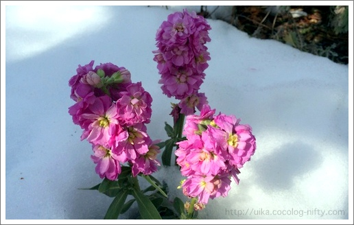 lower blooms in snow