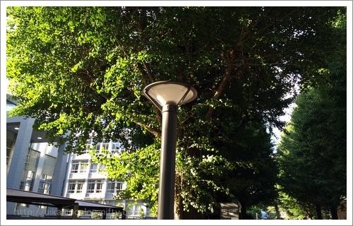 Hiyoshi campus